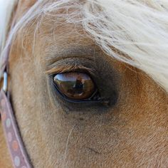 <p>Basing knowledge on preconceived beliefs can be detrimental to the welfare of many animals.  The horse is likely one of the most misunderstood animals on the planet that has carried a biased reputation for centuries – a reputation for being a working animal and existing for mere human entertainment.  </p>