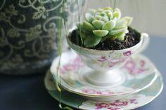 re-purposed tea cup,