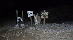 Jibe City Donkey, Bonaire | by goinformed.net
