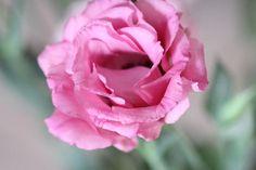פרחים מצוינים לחיזוק תחושת הביחד והפגת הבדידות הם ורדים ורודות, טוליפים, ליזיאנטוסים ודלפיניום.