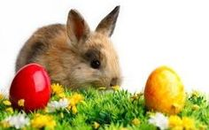 Easter Bunny Images, Easter Bunny Pictures : Today here we are going to share some best Free Easter Images and Easter Pics 2016 with you. Easter Bunny Images, Happy Easter Bunny, Easter Pictures, Logo Video, Ostern Wallpaper, Rabbit Wallpaper, Gb Bilder, Background Hd Wallpaper, 2017 Background