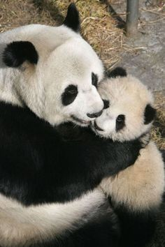 100 Pictures of Hugs to Be Thankful For - Heartwarming Pictures of Hugs