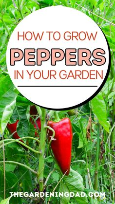 Learn 7 EASY Steps on How to Grow Peppers in Your Garden! Vegetable Gardening, Container Gardening, Gardening Tips, Fast Growing Plants, Growing Vegetables, Kosher Recipes, Easy Recipes, Landscaping Tips, Garden Landscaping