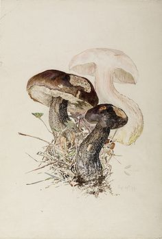 Watercolors and work of Beatrix Potter in the fields of botany and mycology