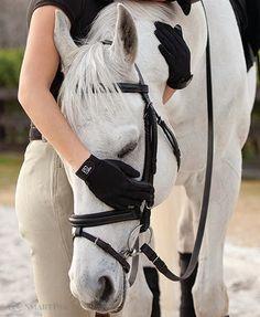 My horse, my love