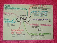 #estudos #biologia #dna  Estudos sobre o RNA! Dna E Rna, Human Body Facts, Creative Notebooks, Cell Cycle, Med Student, Study Hard, Studyblr, Study Notes, Study Motivation