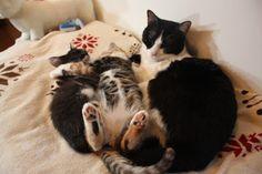alifetoyonaka: 親子のようなわが家の猫さんたち♪