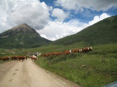 Traffic jam near Crested Butte