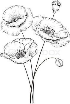 Colour Images Line Drawing Doodle Art Diy Art Emboss Poppies Dandelion Watercolour Art Projects Flower Line Drawings, Flower Sketches, Drawing Sketches, Tattoo Sketches, Flower Drawing Tutorials, Sketching, Fabric Painting, Painting & Drawing, Painting Patterns