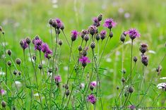 34 Sortes Jardin de Campagne Sud Angleterre Tropica 1000 Graines Fleurs Sauvages