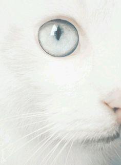 Si fa presto a dire bianco, c'è quello raffinato e quello dozzinale, ogni sfumatura ha un suo carattere. Haruki Murakami Il bianco non è un'assenza di colore, è una cosa brillante…