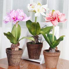 Оказывается есть одна маленькая хитрость, для того чтобы цветок цвел пышно и долго нужна специальная подкормка. Секрет её прост и доступен, делюсь, пусть и Ваши цветочки Вас порадуют.