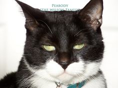 Exclusively Cats Veterinary Hospital Blog: Meet Mr. January!