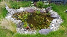 First frog in wildlife pond — BBC Gardeners' World Magazine Small Backyard Ponds, Ponds For Small Gardens, Fish Pond Gardens, Small Ponds, Backyard Water Feature, Above Ground Pool Landscaping, Pond Landscaping, Landscaping With Rocks, Garden Pond Design