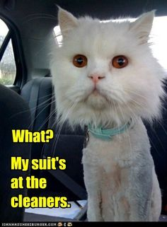 funny-pictures-lolcats-my-suits