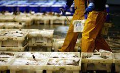 opțiune prețuri modele model pescar)