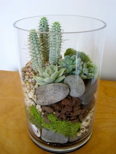 Cute and simple- don't water this one too much! I like the variety of textures and colours in the substrate, and the different heights of the plants. by lindsey