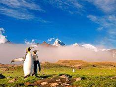 Um fotógrafo flagrou cerca de 200 mil pinguins na ilha da Geórgia do Sul, localizada no oceano antártico  Foto: The Grosby Group