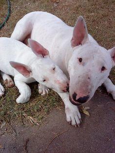 Maddii & Pup