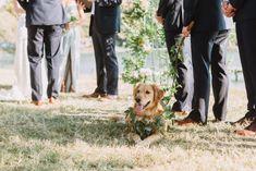 Greenery leash, greenery collar, golden retriever wedding, dog wedding, groomsman, outdoor wedding