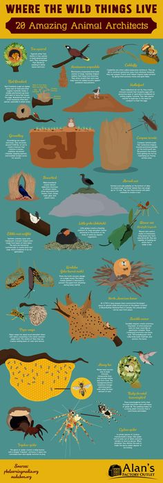 Where the Wild Things Live: 20 Amazing Animal Architects #Infographic #Animal
