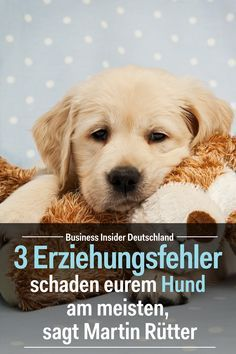 "Diese 3 Erziehungsfehler schaden eurem Hund am meisten, sagt Martin Rütter ""There are three cardinal errors in the relationship between dog and human,"" says Germany's most well-known dog trainer. Baby Dogs, Pet Dogs, Dog Cat, Cute Puppies, Dogs And Puppies, Bulldog Puppies, Pitbull, Dog Training Tips, Dog Names"