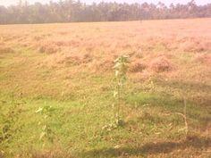 Land for sale in kodakara,Thrissur, Kodakara. 40 cent paddy field for sale in Kodakara,Thrissur. Buy, sell, rent properties in thrissur through sichermove.com