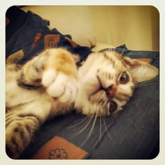 You must love me!  #cat #life #love #lovely
