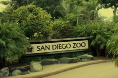 I've been to San Diego, but never the zoo.