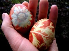 Here is our latest round of Easter eggs dyed with plants. We made two dye baths of onion skins. One pot was with yellow onion skins and the other was with red onion skins. This time we used flowers AND leaves for our prints and were quite happy with this results! The flowers themselves gave […]