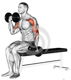 Alternating Curls With Dumbbells Stock Illustration - Illustration of first, fitness: 44162679 Exercising. Alternating Curls With Dumbbells Stock Illustration - Illustration of double, first: 44162679 Upper Body Hiit Workouts, Gym Workouts For Men, Weight Training Workouts, Chest Workouts, Bicep And Tricep Workout, Dumbbell Workout, Gym Workout Chart, Gym Workout Tips, Shoulder Workout
