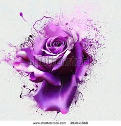 http://thumb1.shutterstock.com/display_pic_with_logo/953956/393041860/stock-photo-beautiful-purple-rose-closeup-on-a-white-background-with-elements-of-the-sketch-and-spray-paint-393041860.jpg