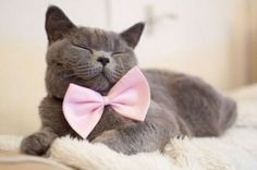 beautiful cat wearing a pink bow