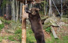 Familienfreundliche Ausflüge und Freizeitideen in Niederösterreich Freundlich, Goats, Animals, Adventure, Tips, Animales, Animaux, Animal, Animais