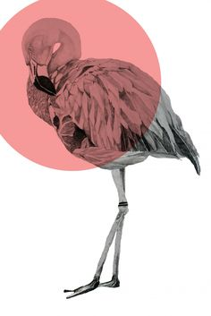 Balibart | Morgan Kendall - Flamingo