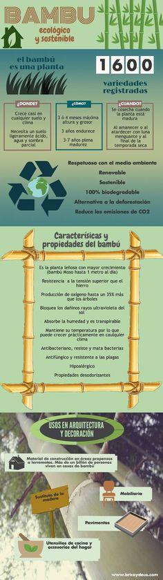 Infografía sobre el bambú como recurso ecológico y sostenible en www.bricoydeco.com