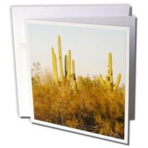 3dRose - Jos Fauxtographee Realistic - Some cactus out in the brush in Casa Grande, Arizona - Greeting Cards
