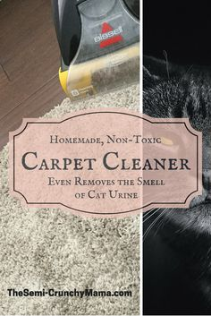 How To Get Rid Of The Smell Of Cat Urine Cat Pee