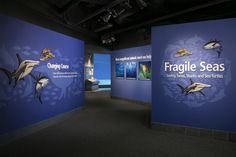 Shark, How To Remove, Museum, Pictures, Photos, Sharks, Museums, Grimm
