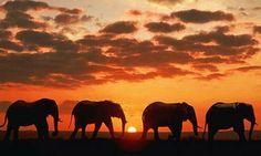 Go on an African safari in Krugar National Park