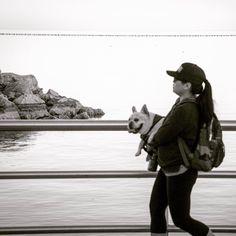 Dog walking  #mychicagopix #chicagogrammars #insta_chicago #chicagojpg #wu_chicago #flippinchi #ArtOfChi #likechicago #ig_chicagoland #chicagogram #igchicago #mychicagopix #igerschicago #chigram #chicity_shots #instachicago #explorechicago #thechieye #chicitymoods #ilovechi #gameoftones #blackandwhite #dog #streetphotography