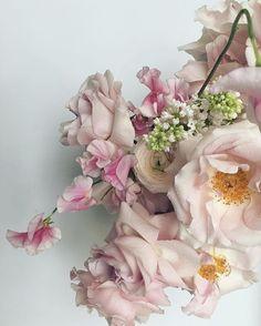 Alex Eagle x Fjura My Flower, Flower Art, Flower Power, Ikebana, Pretty Flowers, Garden Plants, Flower Arrangements, Floral Design, Floral Wreath