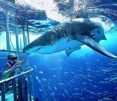 I hate sharks Misunderstood Shark, Pink Shark, Cool Sharks, Sea Dweller, Great White Shark, Shark Week, Big Fish, Ocean Life, Amphibians