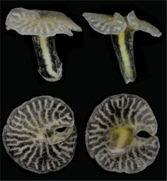 NEW SPECIES 2015: include Holotype Dendrogramma enigmatica, which looks like a mushroom, but is an animal, & may belong in a phylum of it's own.  many photos + info.