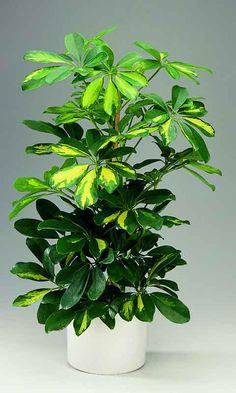 Rastliny okrasné listom | Kvety a Záhrada Planting, Plants