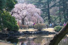 Travel Tips: Φωτογραφικό ταξίδι στις ανθισμένες κερασιές στην Ιαπωνία