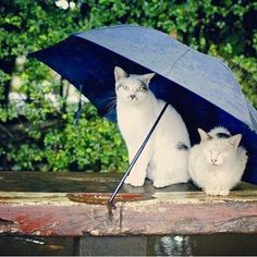 Protect what's important to you.  Zoemspray is a water repellent spray coating for all electronic devices.    #techaddict #electronics #waterproof #waterresistant #moisture #drizzle #rain #rainyday #catsofinstagram #umbrella #waterdamage #mobilephone #iphone #samsung #smartphone