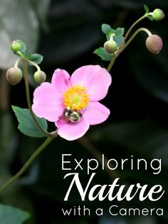 Exploring Nature with a Camera from Inner Child Learning Macro Photography, Photography Tutorials, Photography Ideas, Safari, Holistic Education, Nature Study, Inner Child, Children And Family, After School