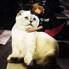 18 Reasons Taylor Swift is the Ultimate Cat Lady - We Love Cats and Kittens