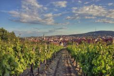 Hungarian Wine Regions: Sopron And Its Vigorous Blue Frankish Hungary, Eastern Europe, Czech Republic, Romania, Budapest, Austria, Poland, Vineyard, Country